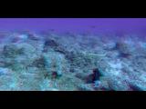 Большое путешествие вглубь океанов 3D / OceanWorld 3D (2009) ВDRip 720р [vk.com/Feokino]